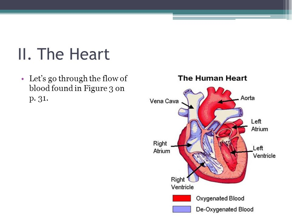 II. The Heart Let's go through the flow of blood found in Figure 3 on p. 31.