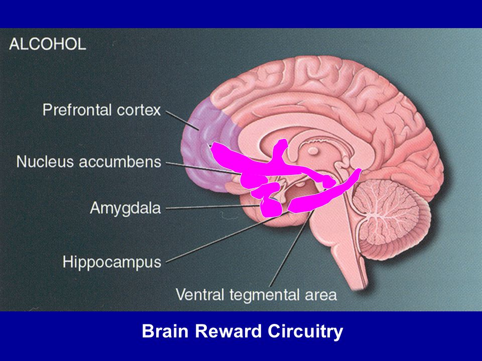 Brain Reward Circuitry