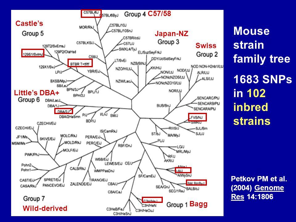 Mouse strain family tree