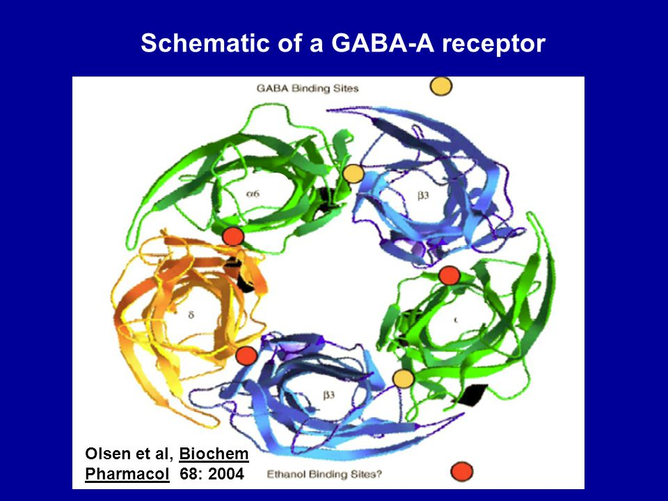 Schematic of a GABA-A receptor