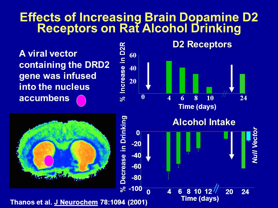 Effects of Increasing Brain Dopamine D2 Receptors on Rat Alcohol Drinking