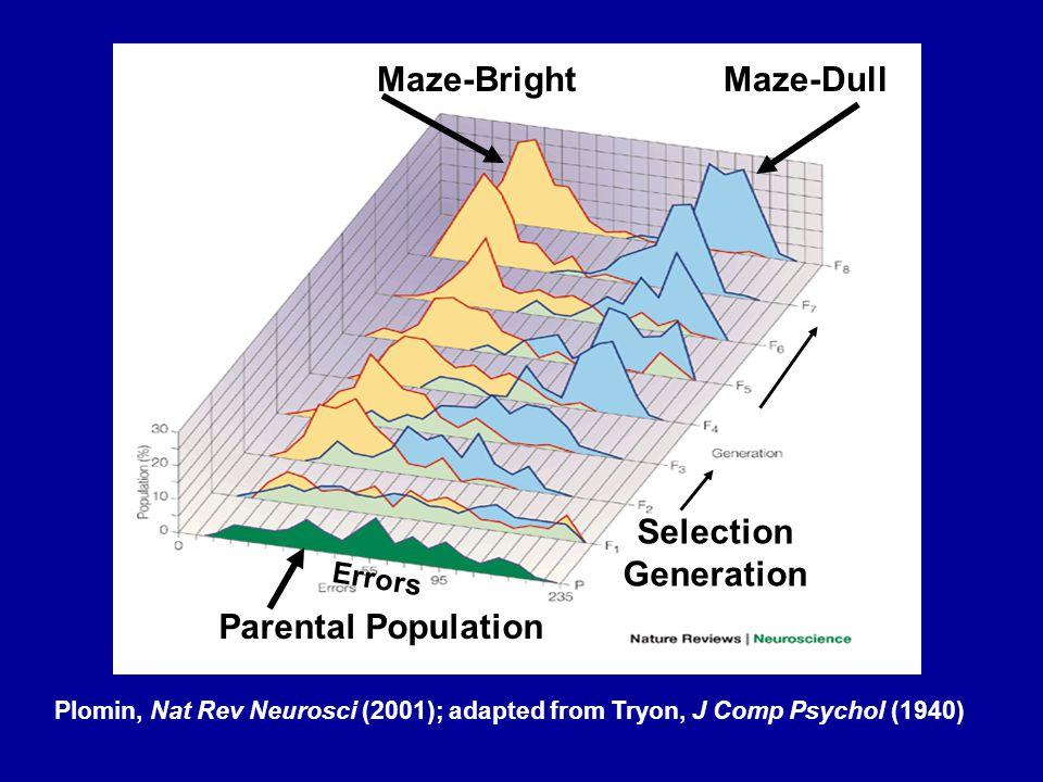 Maze-Bright Selection Generation Parental Population