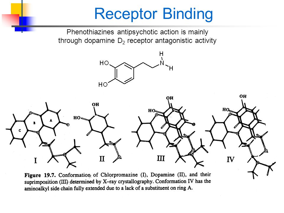 Receptor Binding Phenothiazines antipsychotic action is mainly through dopamine D2 receptor antagonistic activity.