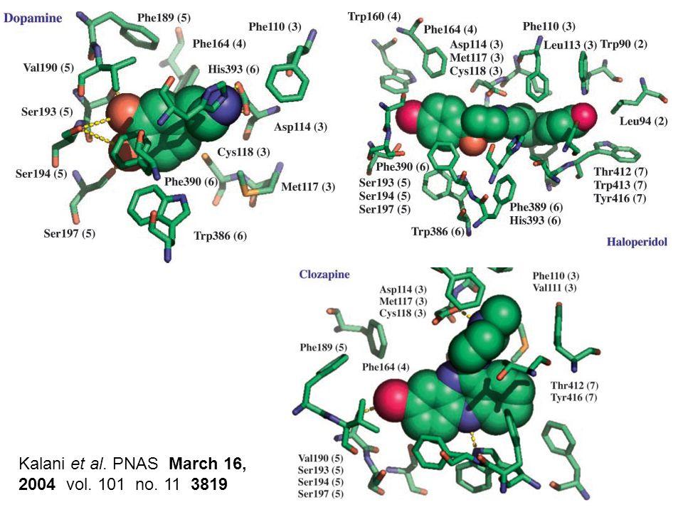 Kalani et al. PNAS March 16, 2004 vol. 101 no. 11 3819