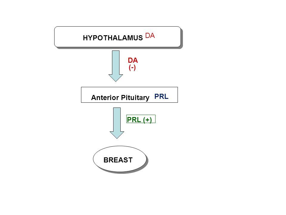 DA HYPOTHALAMUS DA (-) Anterior Pituitary PRL PRL (+) BREAST
