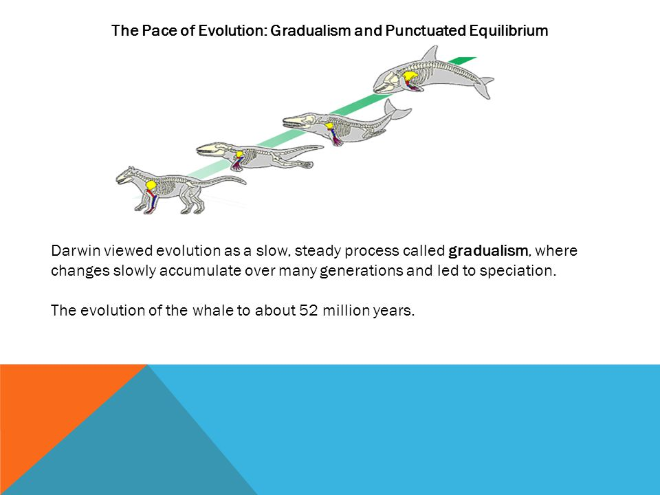 The Pace of Evolution: Gradualism and Punctuated Equilibrium