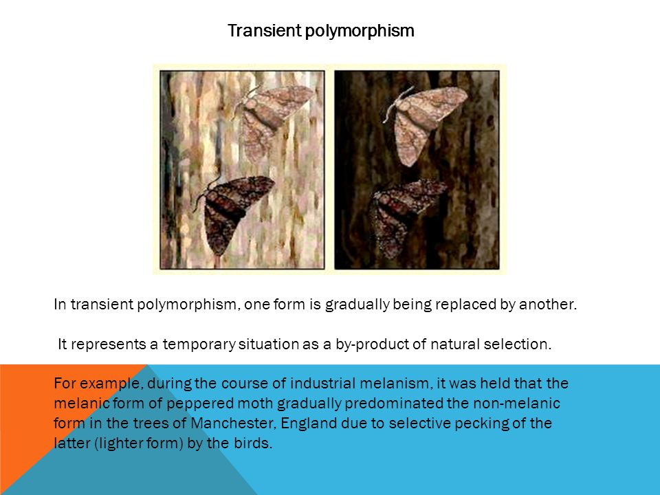 Transient polymorphism