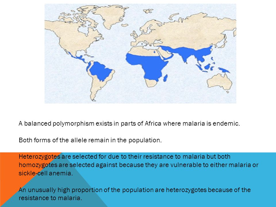 A balanced polymorphism exists in parts of Africa where malaria is endemic.