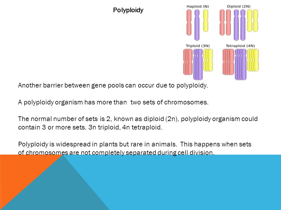 Polyploidy Another barrier between gene pools can occur due to polyploidy. A polyploidy organism has more than two sets of chromosomes.