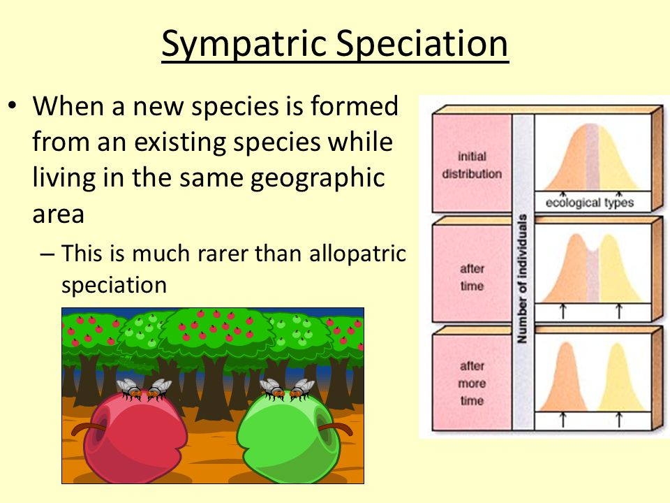 Sympatric Speciation When a new species is formed from an existing species while living in the same geographic area.