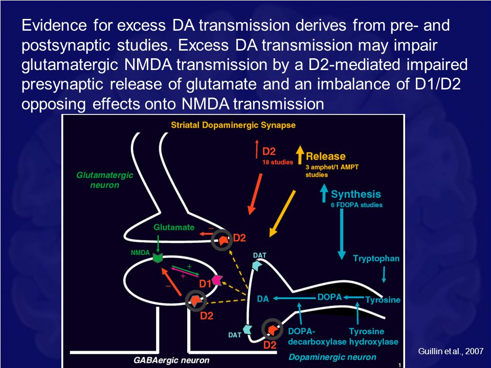 Evidence for excess DA transmission derives from pre- and postsynaptic studies. Excess DA transmission may impair glutamatergic NMDA transmission by a D2-mediated impaired presynaptic release of glutamate and an imbalance of D1/D2 opposing effects onto NMDA transmission