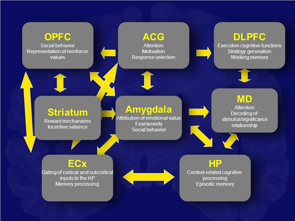 OPFC ACG DLPFC MD Striatum Amygdala ECx HP