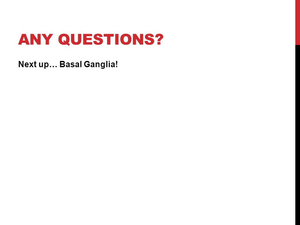 Any questions Next up… Basal Ganglia!