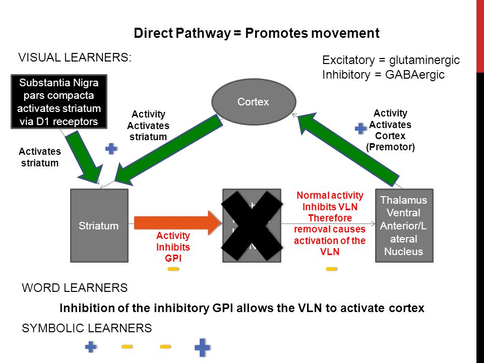 Direct Pathway = Promotes movement