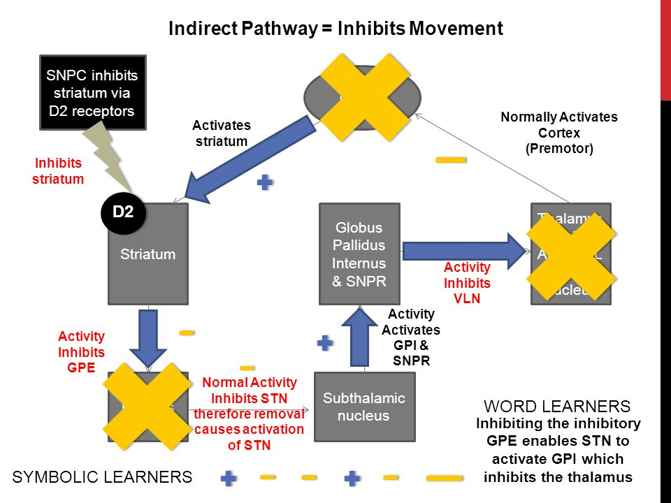 Indirect Pathway = Inhibits Movement Normally Activates Cortex