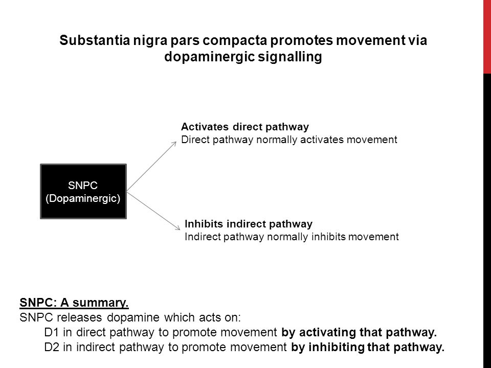 Substantia nigra pars compacta promotes movement via dopaminergic signalling