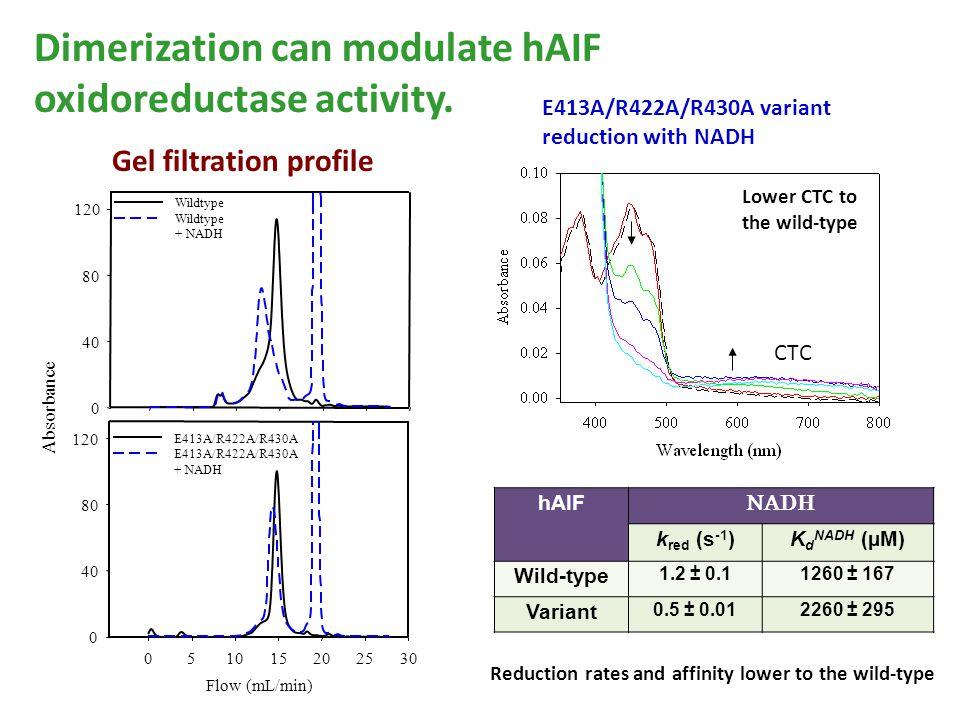 Dimerization can modulate hAIF oxidoreductase activity.