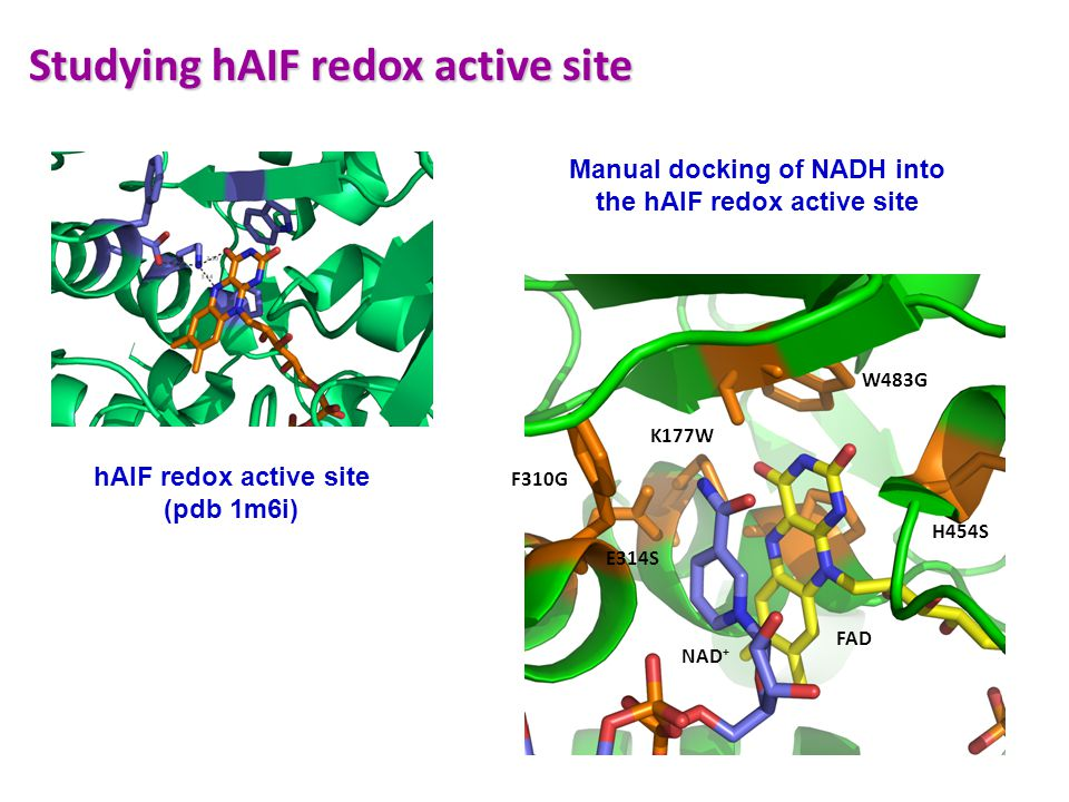 Studying hAIF redox active site