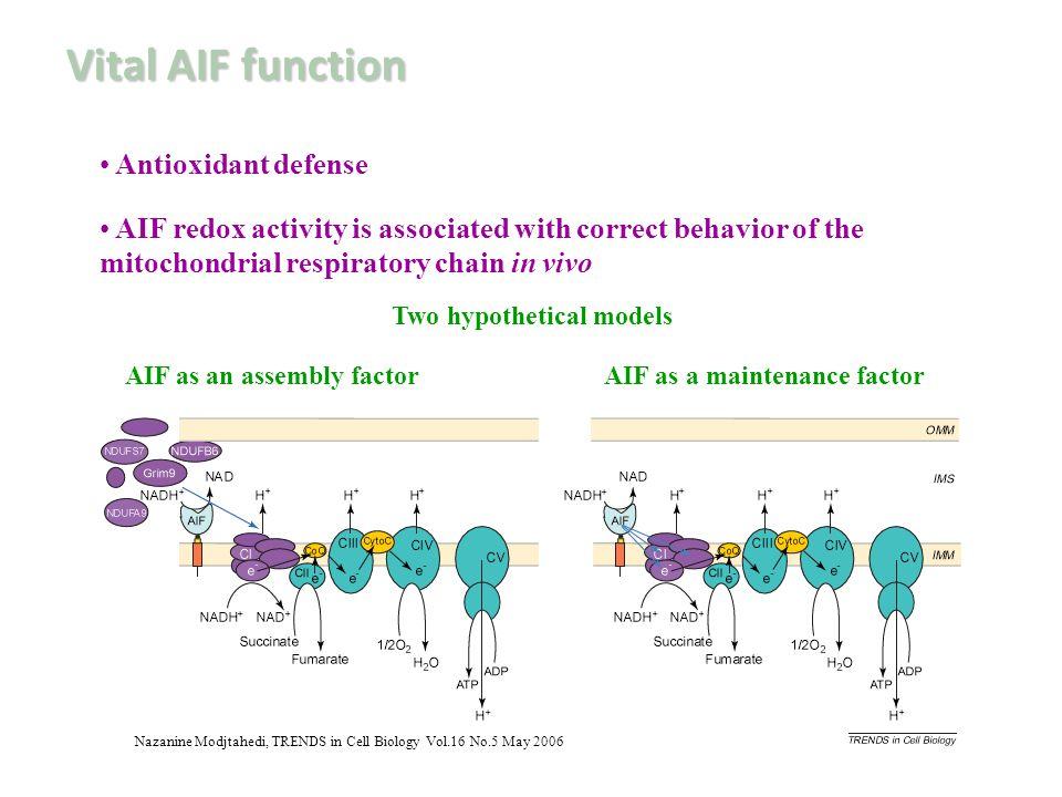 Vital AIF function Antioxidant defense