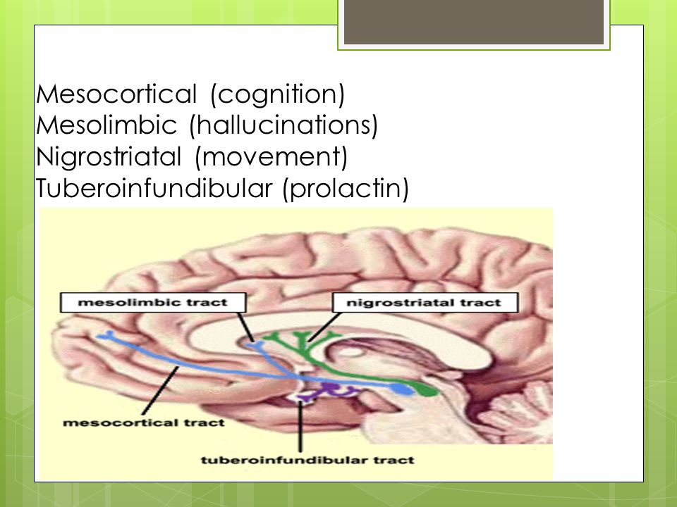 Mesocortical (cognition)