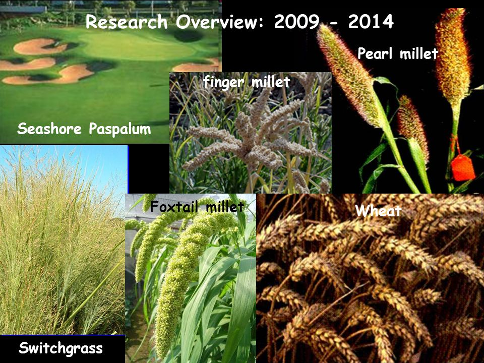 Research Overview: 2009 - 2014 Pearl millet finger millet