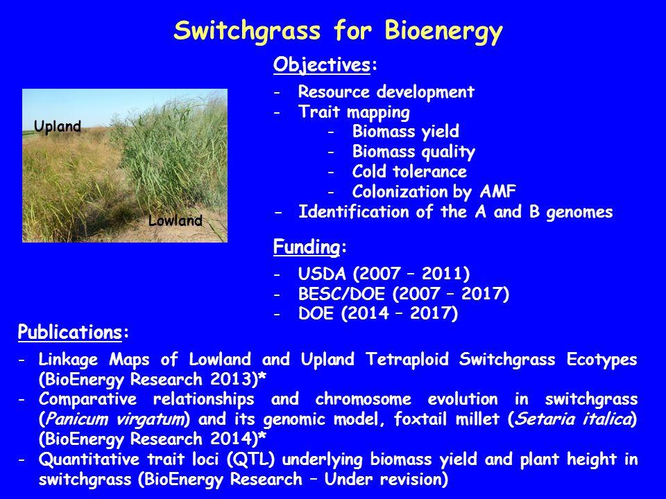 Switchgrass for Bioenergy