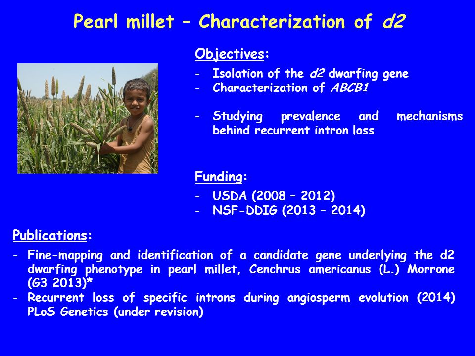 Pearl millet – Characterization of d2