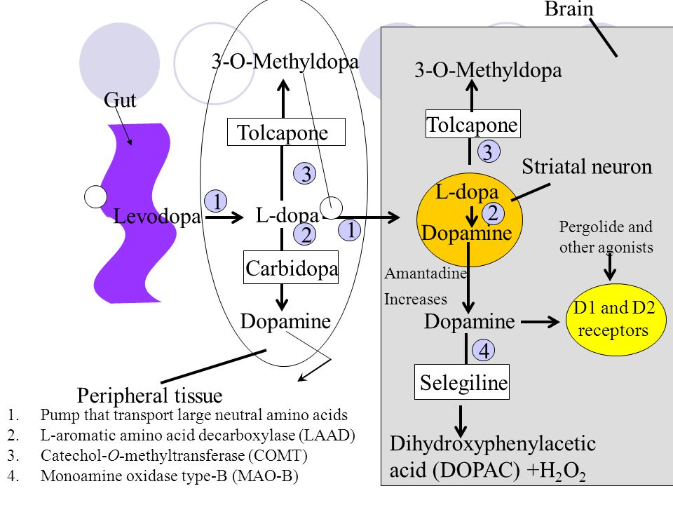 Dihydroxyphenylacetic acid (DOPAC) +H2O2 Brain