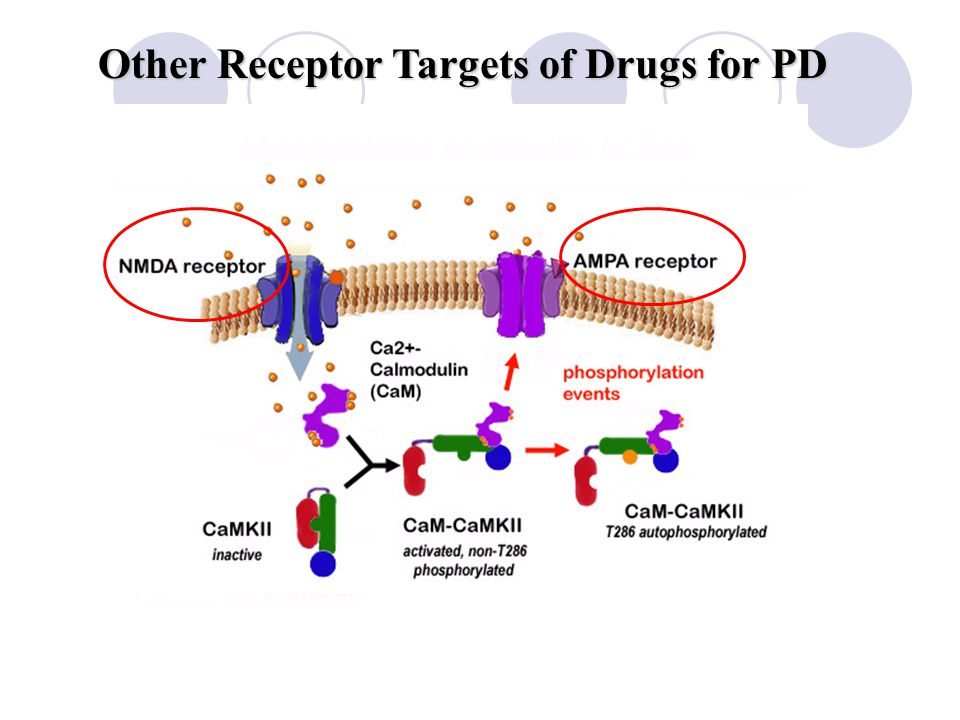Other Receptor Targets of Drugs for PD