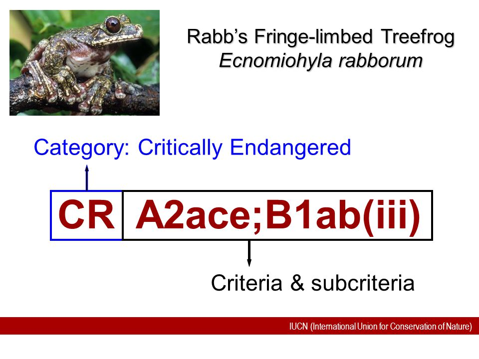 CR A2ace;B1ab(iii) Category: Critically Endangered
