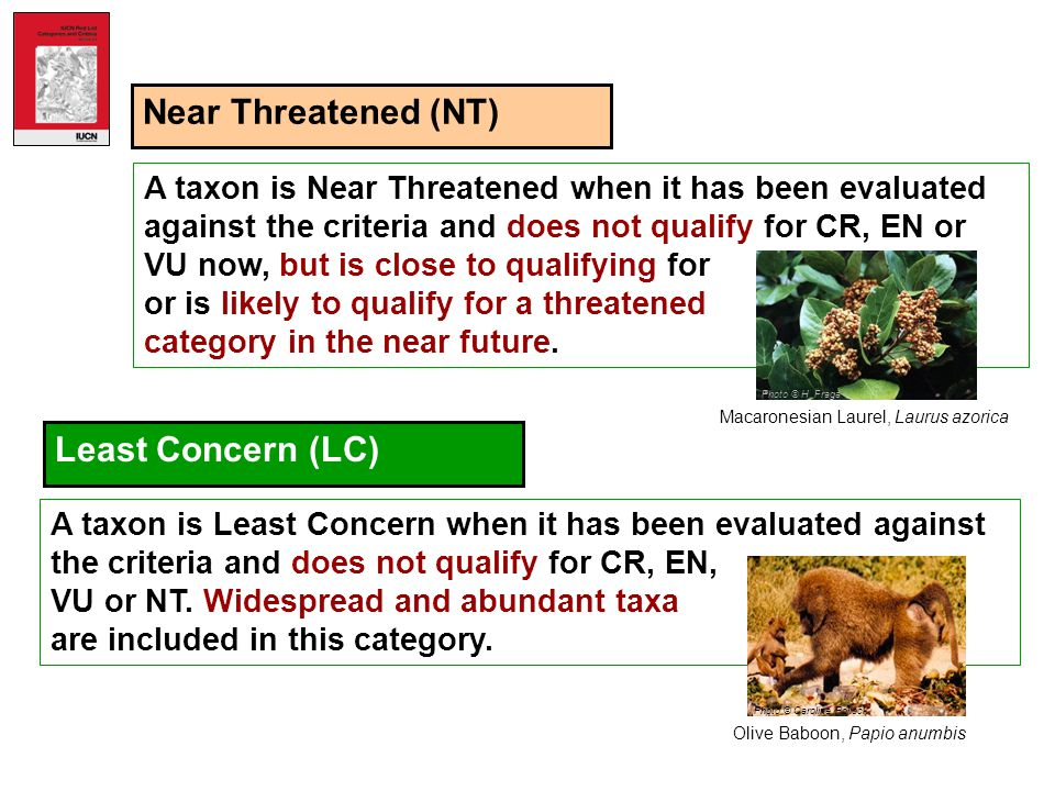 Near Threatened (NT) Least Concern (LC)