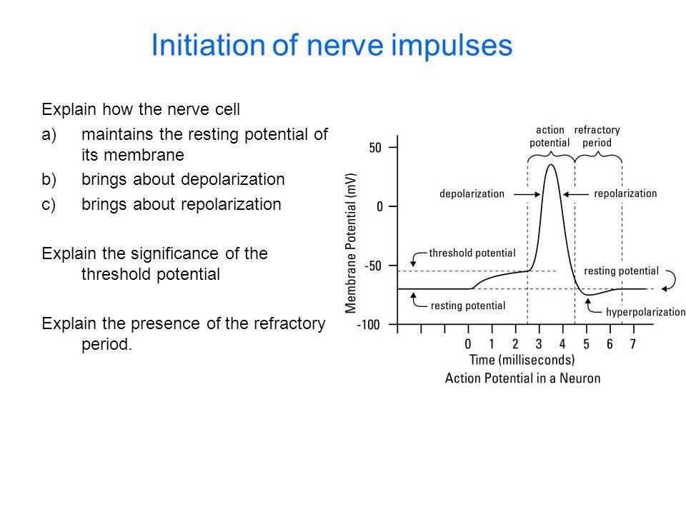 Initiation of nerve impulses