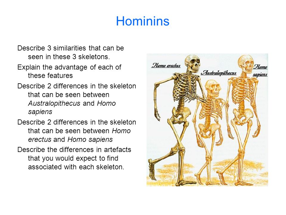 Hominins Describe 3 similarities that can be seen in these 3 skeletons. Explain the advantage of each of these features.