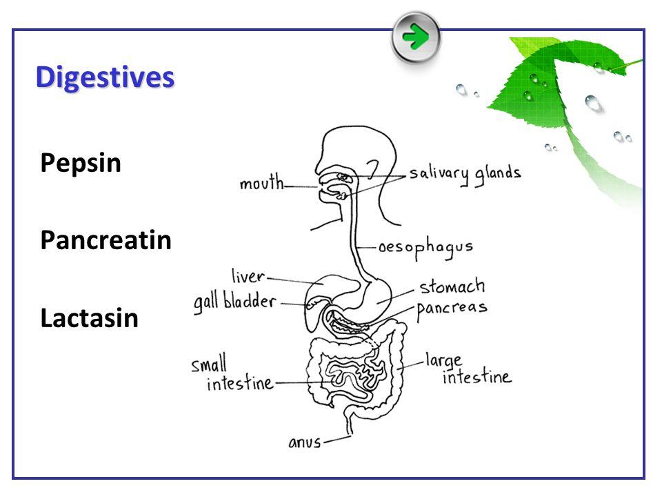 Digestives Pepsin Pancreatin Lactasin