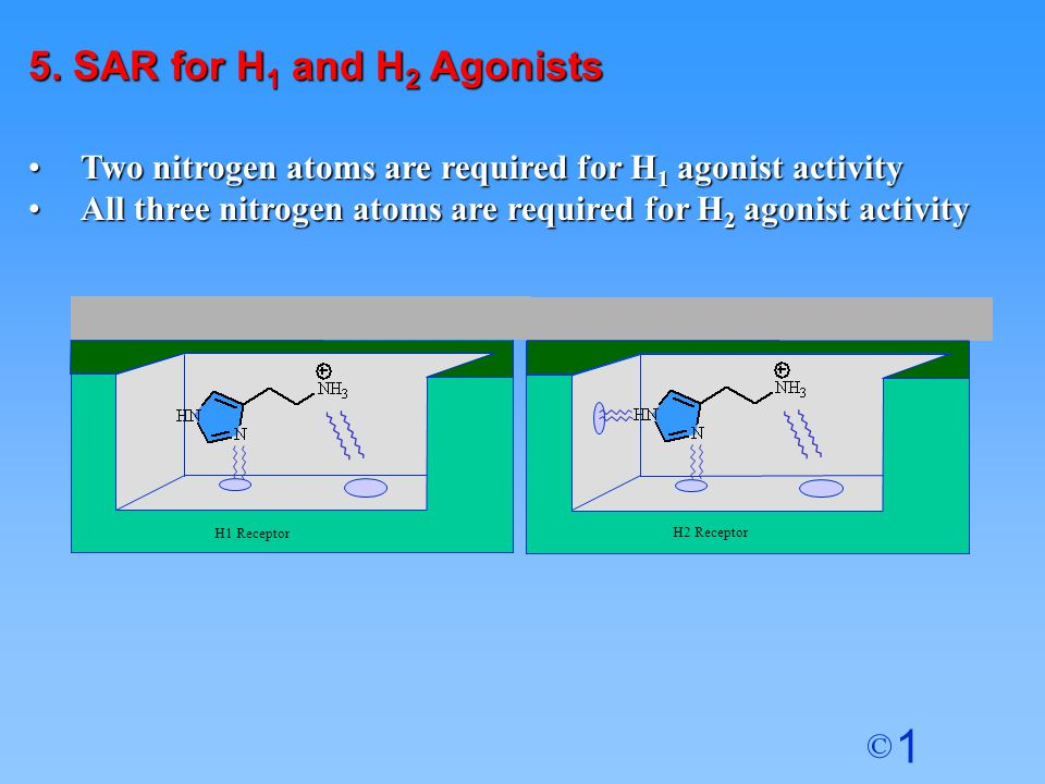 5. SAR for H1 and H2 Agonists Two nitrogen atoms are required for H1 agonist activity. All three nitrogen atoms are required for H2 agonist activity.