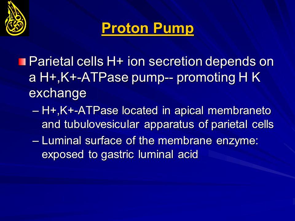 Proton Pump Parietal cells H+ ion secretion depends on a H+,K+-ATPase pump-- promoting H K exchange.