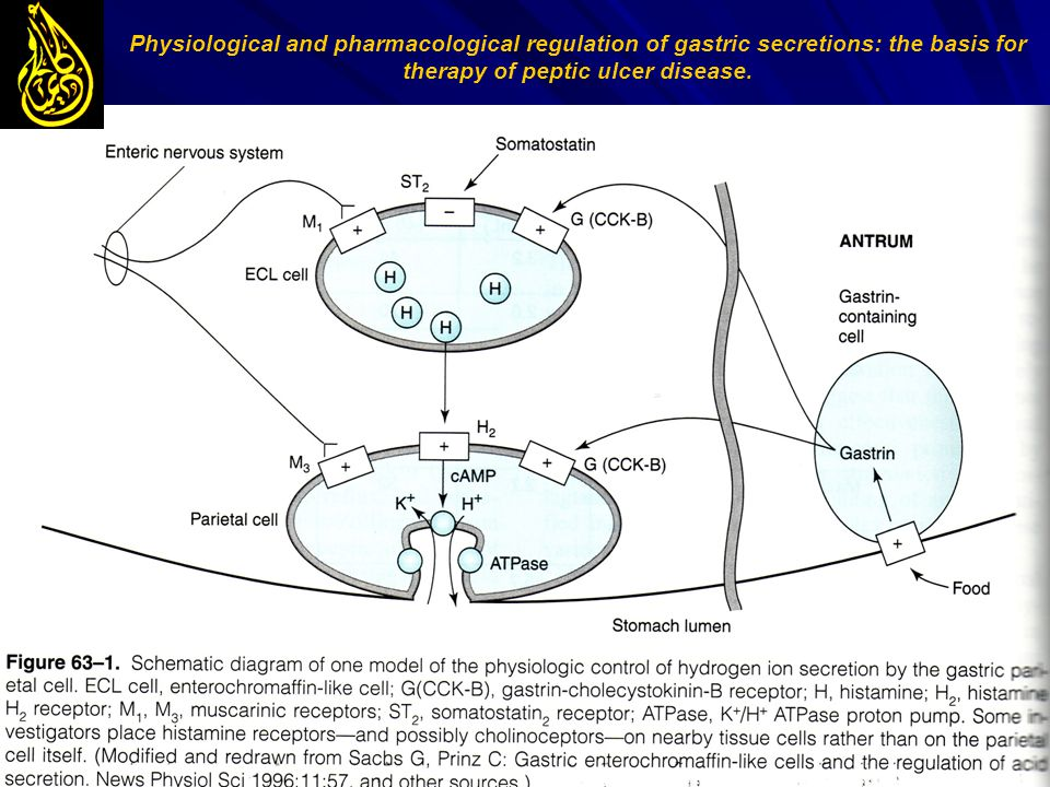 Physiological and pharmacological regulation of gastric secretions: the basis for therapy of peptic ulcer disease.