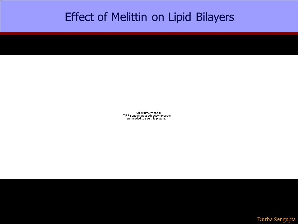 Effect of Melittin on Lipid Bilayers