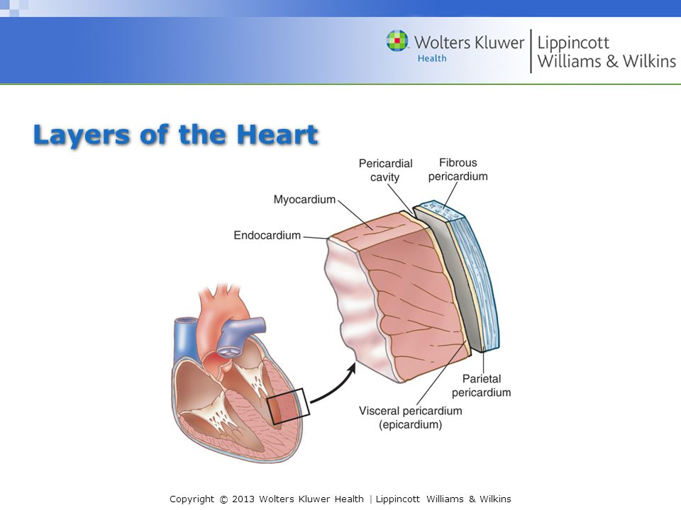Layers of the Heart