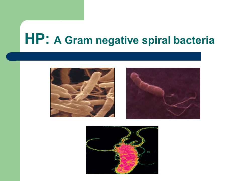 HP: A Gram negative spiral bacteria