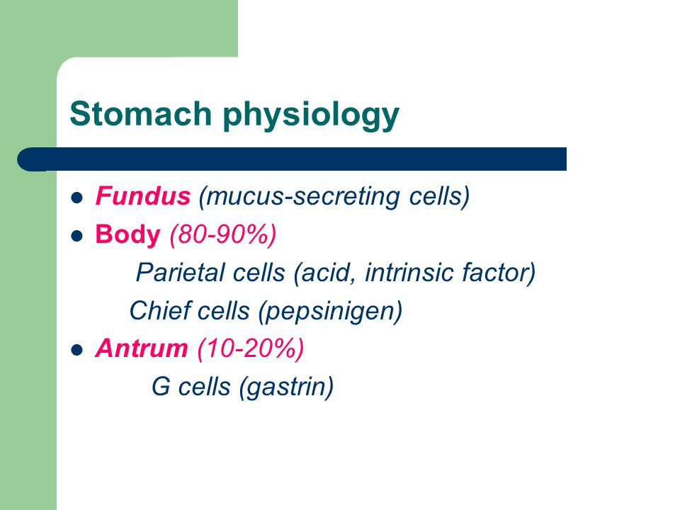 Stomach physiology Fundus (mucus-secreting cells) Body (80-90%)