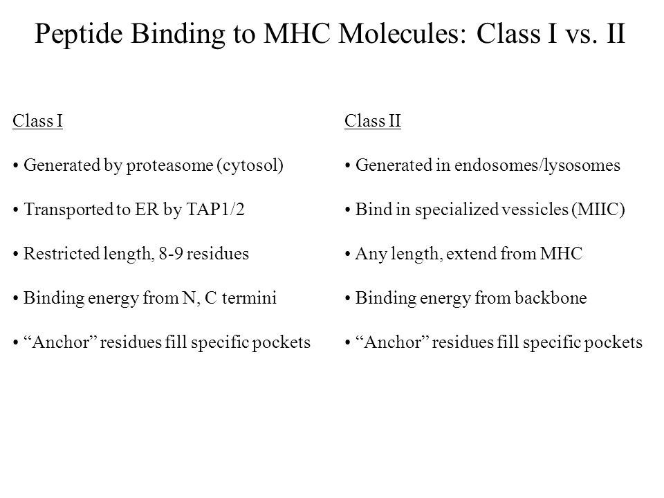 Peptide Binding to MHC Molecules: Class I vs. II