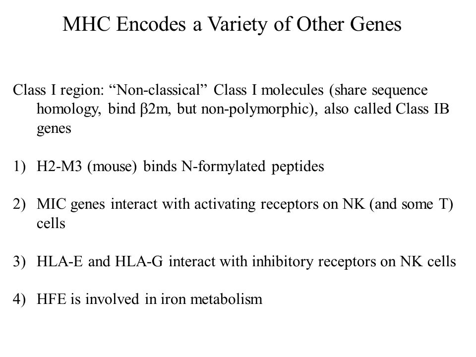 MHC Encodes a Variety of Other Genes