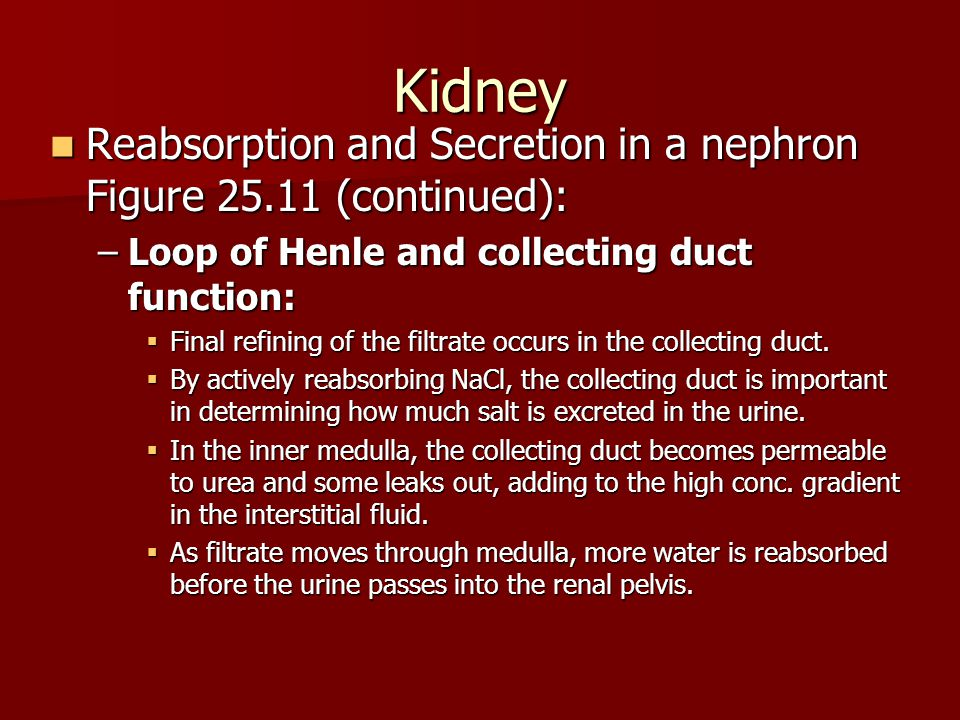 Kidney Reabsorption and Secretion in a nephron Figure 25.11 (continued): Loop of Henle and collecting duct function: