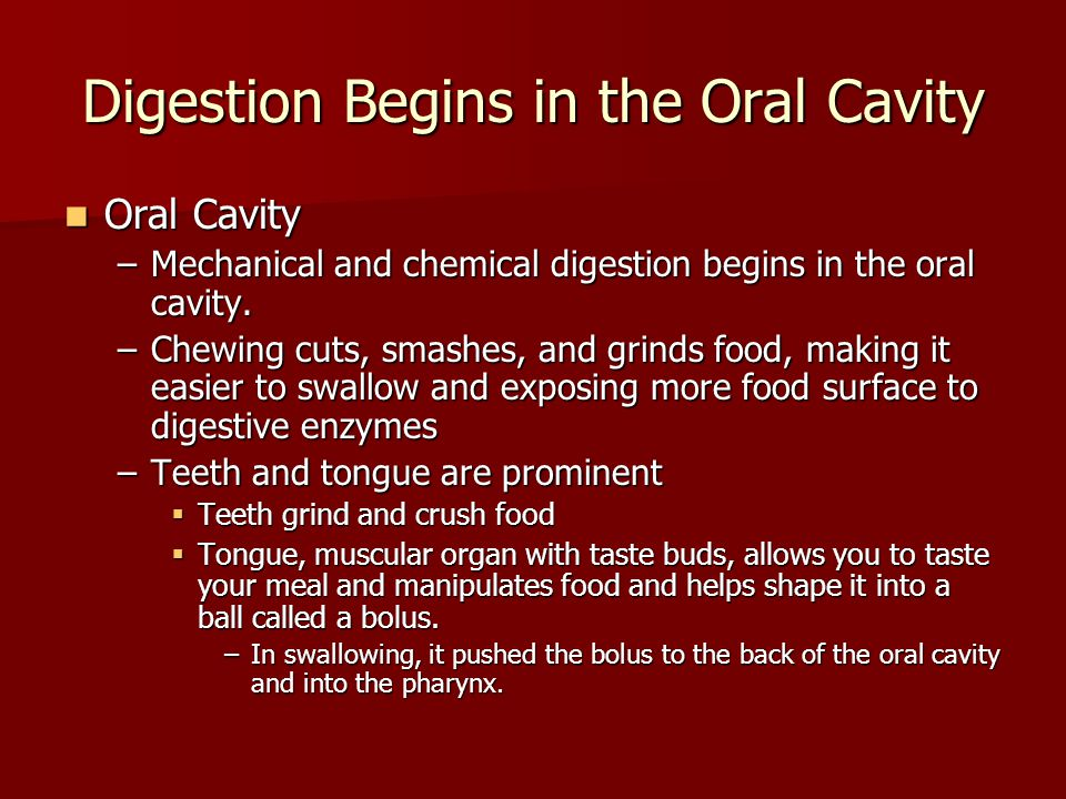 Digestion Begins in the Oral Cavity