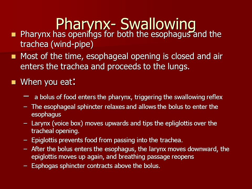 Pharynx- Swallowing Pharynx has openings for both the esophagus and the trachea (wind-pipe)