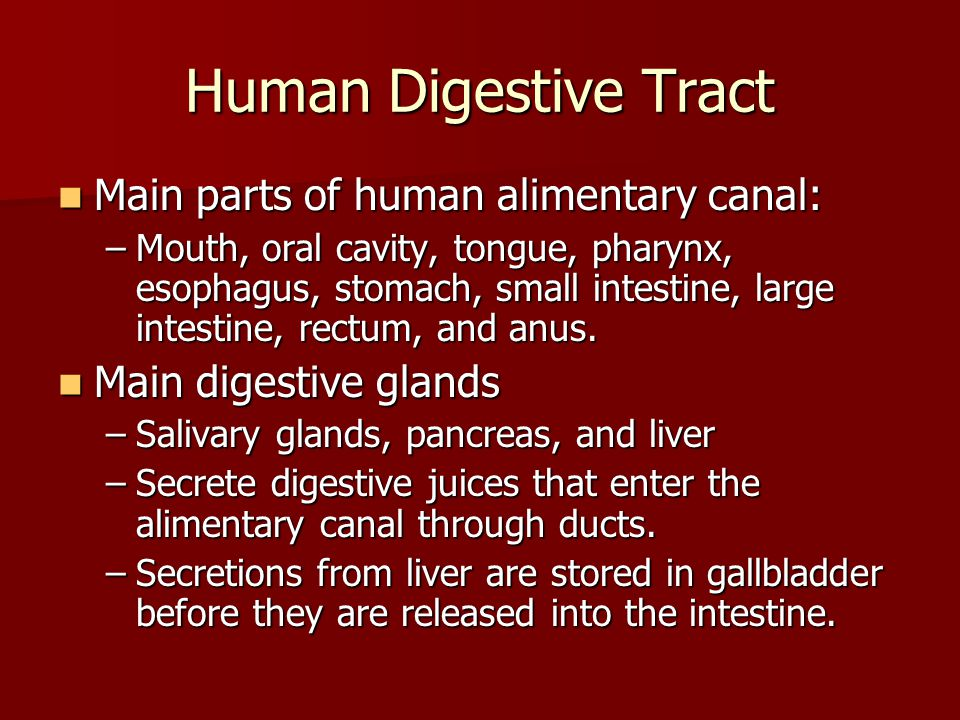 Human Digestive Tract Main parts of human alimentary canal: