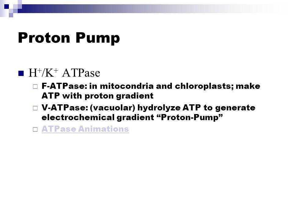 Proton Pump H+/K+ ATPase