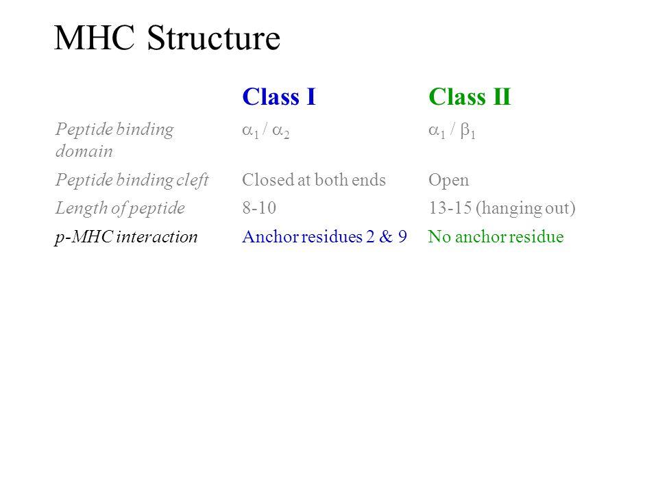 MHC Structure Class I Class II Peptide binding domain 1 / 2 1 / 1