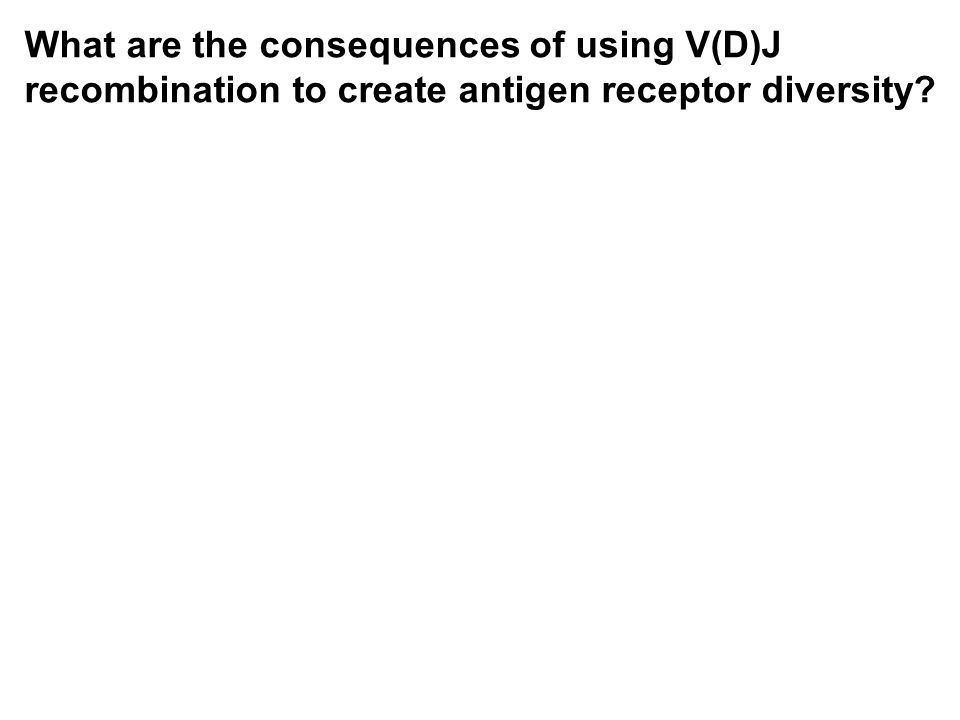 What are the consequences of using V(D)J recombination to create antigen receptor diversity